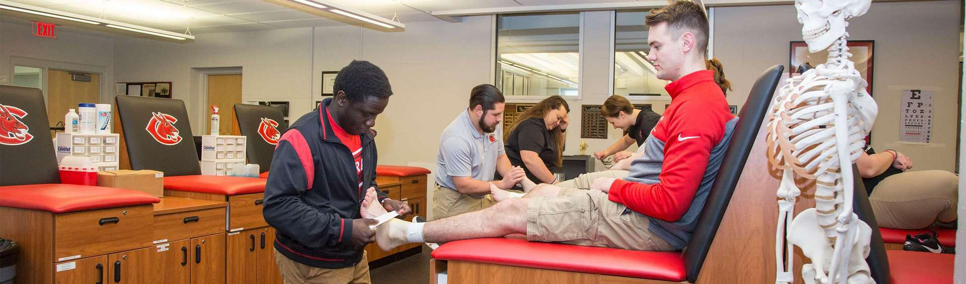 An athletic trainer is rehabilitating an athlete sitting on the training table. There is a skeleton model on the far right.