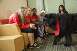 group of students interacting with service dog